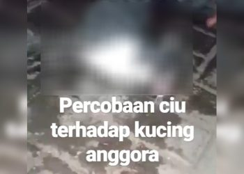 Instastory video kucing dicekoki minuman keras